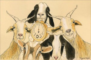 Goats Believe its Always Dinnertime Somewhere, pen and ink by Gwen Kirk