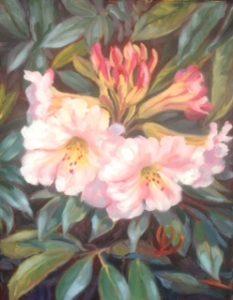 Rhodedendron BlossonOilAN