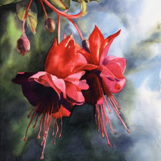 """""""Fuschia Fireworks"""" watercolor by Joan L Brown"""