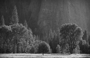 Yosemite meadow (1 of 1)