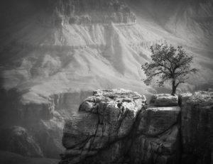 Cliffside Darcie Sternenberg
