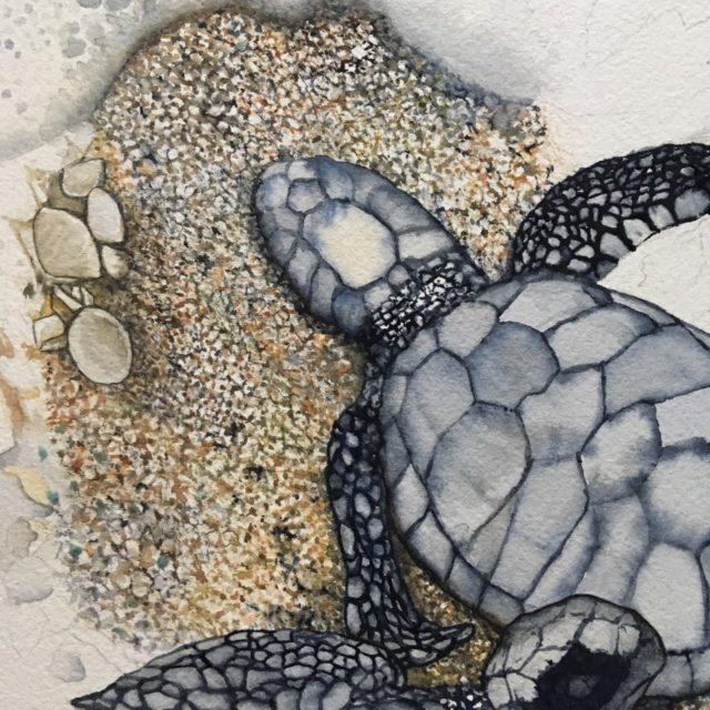 paula fong turtle