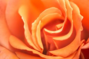 Flower 2 julie bonney