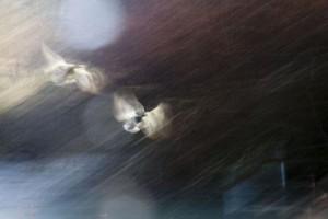 "Diana Standing, ""Flight"" Photograph"