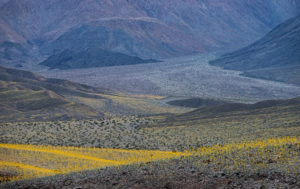 Death Valley Resurrection