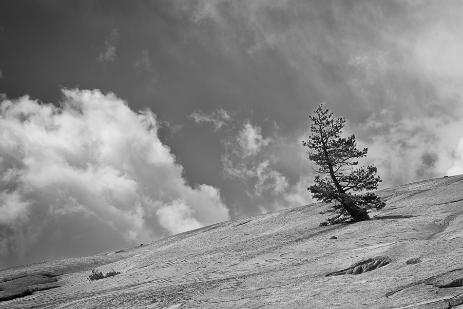 lone tree (1 of 1)